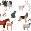Domestic animals1 - Stock Vector