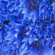 Blue cornflowers closeup background — Stock Photo