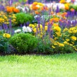 Multicolored flowerbed on a lawn - Stock Photo