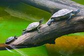 Turtles taken in Kyiv Zoo — Stock Photo