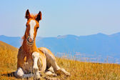 Beautiful red horses taken in the Italian mountains — Stock Photo