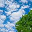 Stock Photo: Spring tree and blue sky