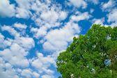 Spring tree and blue sky — Stock Photo