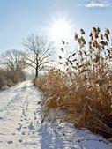 Frozen landscape — Stock Photo