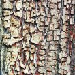 Old weathered cracked board for design — Stockfoto