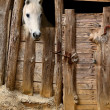 Stock Photo: Stable horse