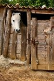 Stable horse — Stock Photo