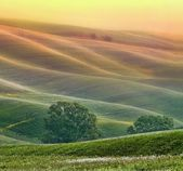 Hilly landscape of Tuscany — 图库照片