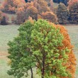 Vertical autumn landscape with trees — Stock Photo