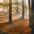 Autumn forest — Stock Photo #3823073