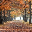 Autumn alley — Stock Photo #3823082