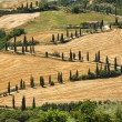 Stock Photo: TuscanLandscape - road serpentines