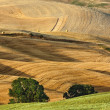 Tuscany summer landscape — Stock Photo #3823278
