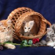 Beautiful little kittens - Foto de Stock  