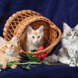 Stock Photo: Beautiful little kittens