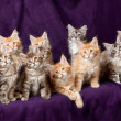 Beautiful little kittens - 图库照片