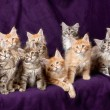 Beautiful little kittens - Stok fotoraf