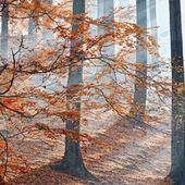 Sunlight through the trees. — Stock Photo