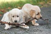 Komik küçük köpek — Stok fotoğraf