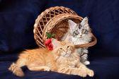 Beautiful little kittens — Stock Photo