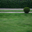 Stock Photo: Beautiful classical garden