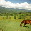 Horse on the pasture — Stock Photo