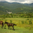 Stock Photo: Horses on the pasture