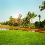 湛水田んぼのある風景します。 — ストック写真