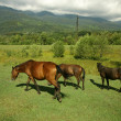 Horses on the pasture — Stock Photo #2877234