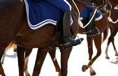 Riding horses — Stock Photo