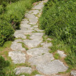 Stone path with green grass - Stock Photo