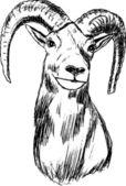 Muflón — Vector de stock