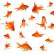 Постер, плакат: Fantail goldfish collage