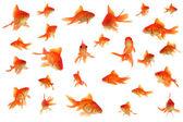 Colagem de peixe-dourado de cauda — Fotografia Stock
