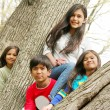 Four children in a tree — Stock Photo
