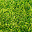 Stock Photo: Green grassy lawn