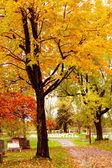 秋天安静国家公墓在树上的叶子. — 图库照片