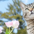 Kitty in the flower garden in spring — Stock Photo
