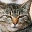 Annoyed cat — Stock Photo