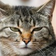 Stock Photo: Annoyed cat