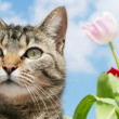 Gray tabby cat in garden — Stock Photo