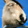 Horse with sense of humor — Stockfoto