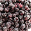 Blackberry (close-up) — Stock Photo