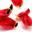 Stock Photo: Bright red petals