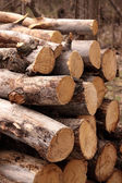 Combined logs — Stock Photo