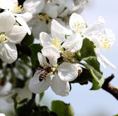 Bees work — Stock Photo