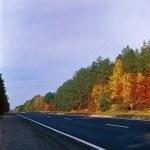 Fall trees - left. — Stock Photo #2702919