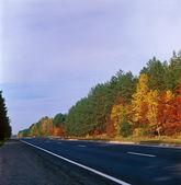 Fall trees - left. — Stock Photo