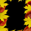 Autumn leaf frame. Black background. — Photo