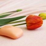 肥皂与郁金香 — 图库照片